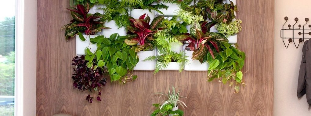 Advantages-of-Building-an-Indoor-Vertical-Garden-Picture